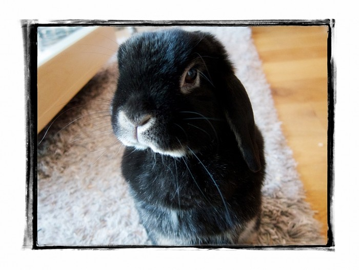 black monday feature Ozzy the bunny